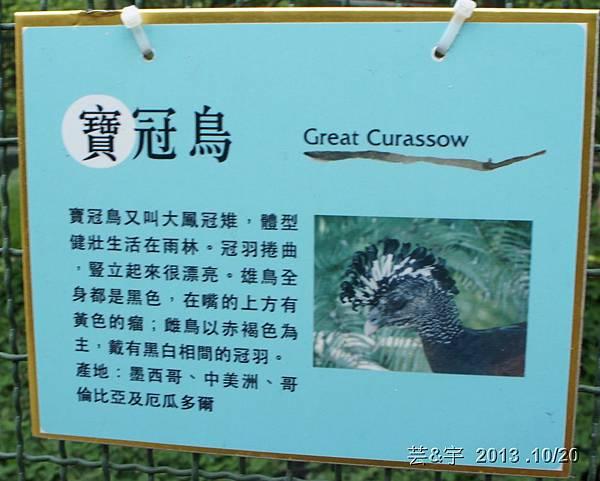 首烏 森林鳥花園 42.JPG