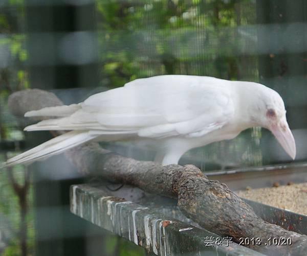 首烏 森林鳥花園 45.JPG