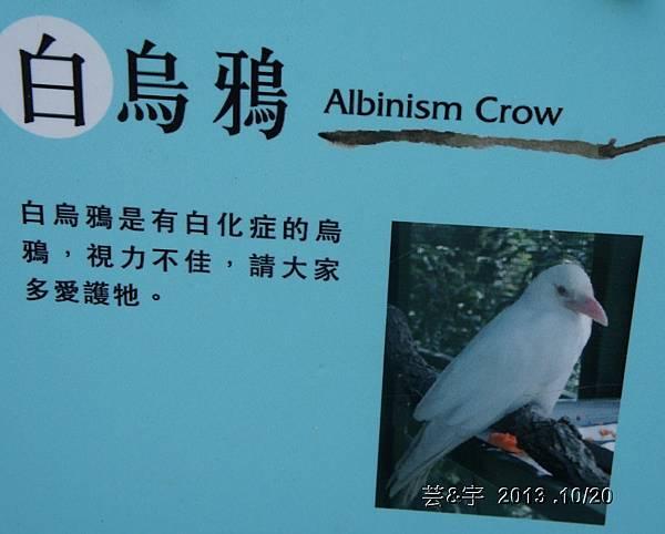 首烏 森林鳥花園 46.JPG
