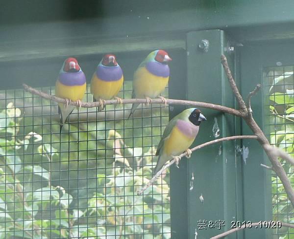 首烏 森林鳥花園 47.JPG
