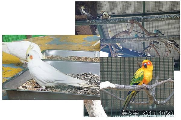 首烏 森林鳥花園 55.JPG