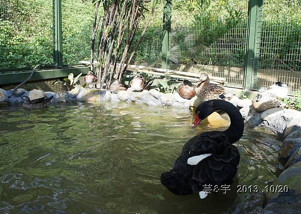 首烏 森林鳥花園 54.JPG