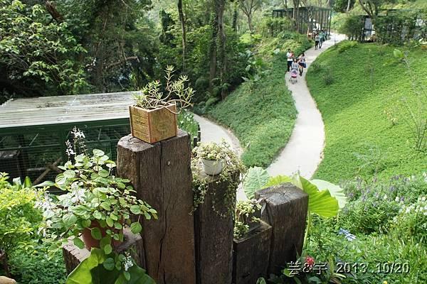 首烏 森林鳥花園 59.JPG