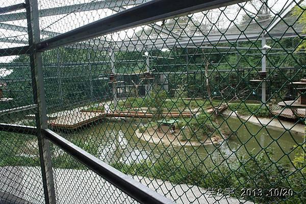 首烏 森林鳥花園 69.JPG