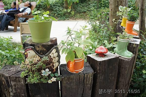 首烏 森林鳥花園 70.JPG