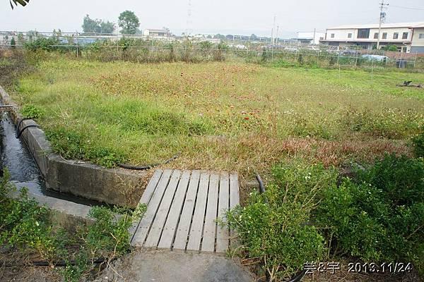 沙發后花園62.JPG