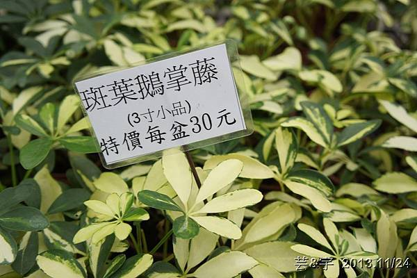 中社花市中社花海8.JPG