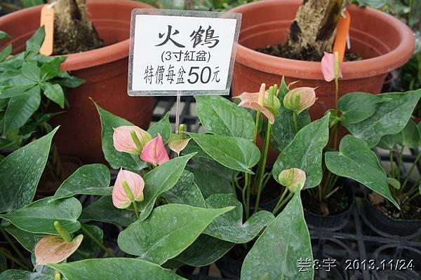 中社花市中社花海13.JPG