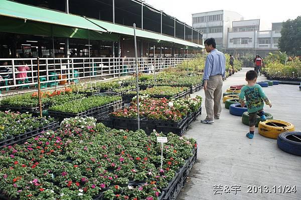 中社花市中社花海29.JPG