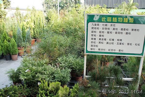 中社花市中社花海37.JPG