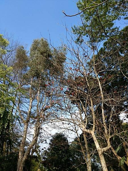 梅山公園_210217_19.jpg