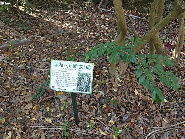 梅山公園_210217_21.jpg