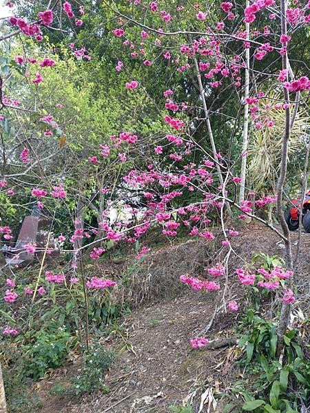 梅山公園_210217_40.jpg