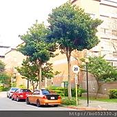 A 社區街景.jpg