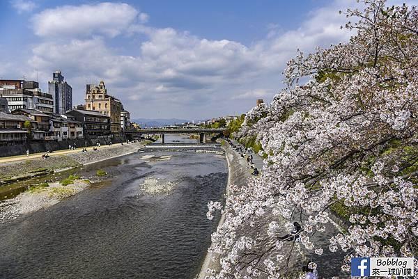 Kamogawa River sakura0.jpg