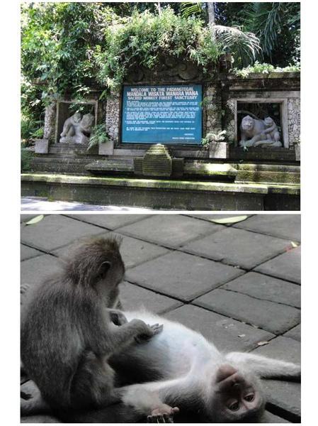 猴林1.jpg