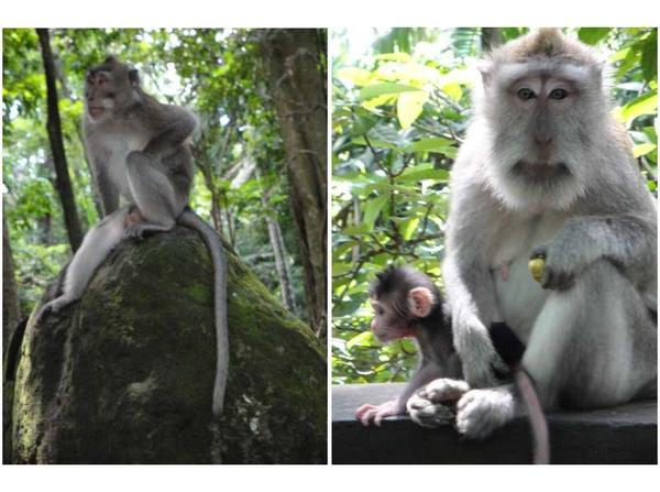 猴林2.jpg