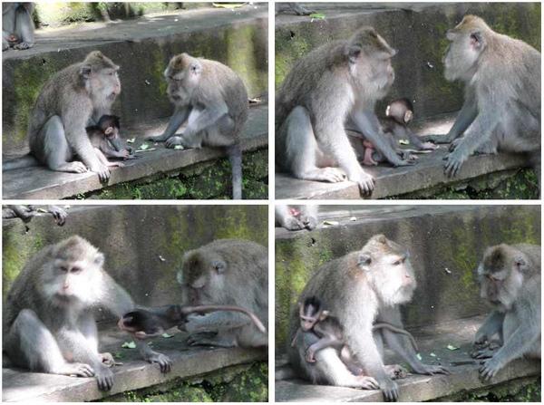 猴林3.jpg