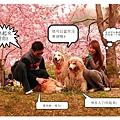 IMG_8621_副本2_副本_副本.jpg