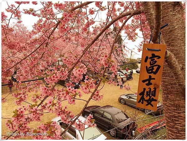 IMG_8488_副本.jpg