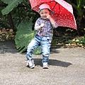 一枝小雨傘