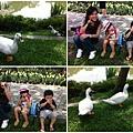 台大校園的鴨鴨公園
