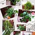 我的植物園