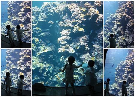 寶貝看珊瑚