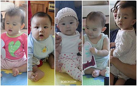 15期寶寶