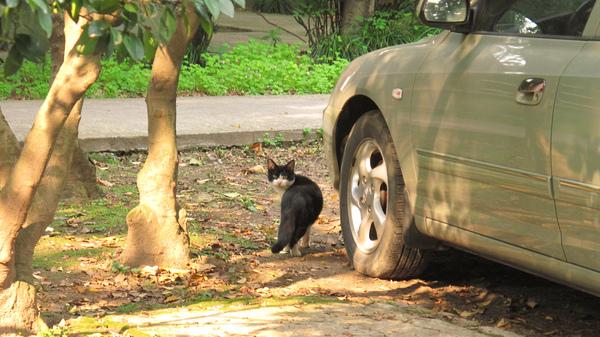 古籍修復館的黑白貓
