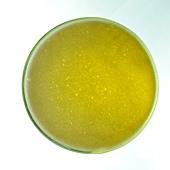 翡翠檸檬茶,健康好享瘦! 無毒食品, 自然減肥產品
