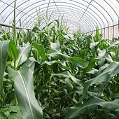 有機蔬菜, 排毒食品,天然,生食,好人生美食