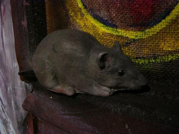 一隻小老鼠XD