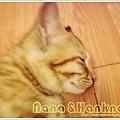 Nana024.jpg