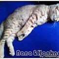 Nana025.jpg