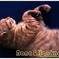 Nana031.jpg