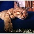 Nana032.jpg