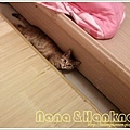Nana033.jpg