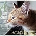 Nana040.jpg