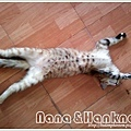Nana044.jpg