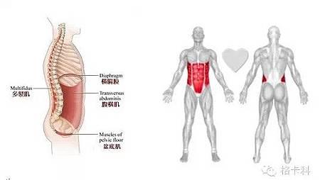 垂直律動機針對核心肌群的訓練(緩解腰背痛的方法)