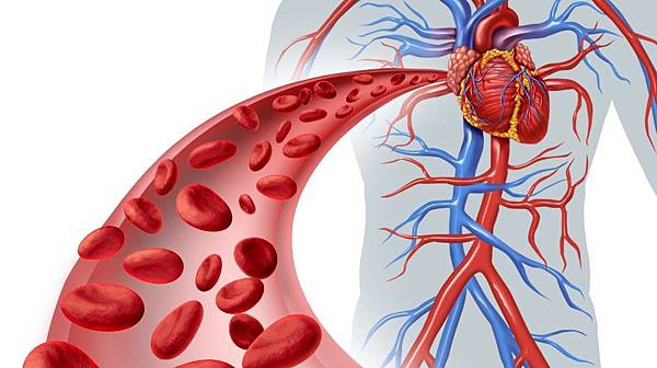 NO(一氧化氮)如何影響血壓?(循證心血管告訴你發生機制)