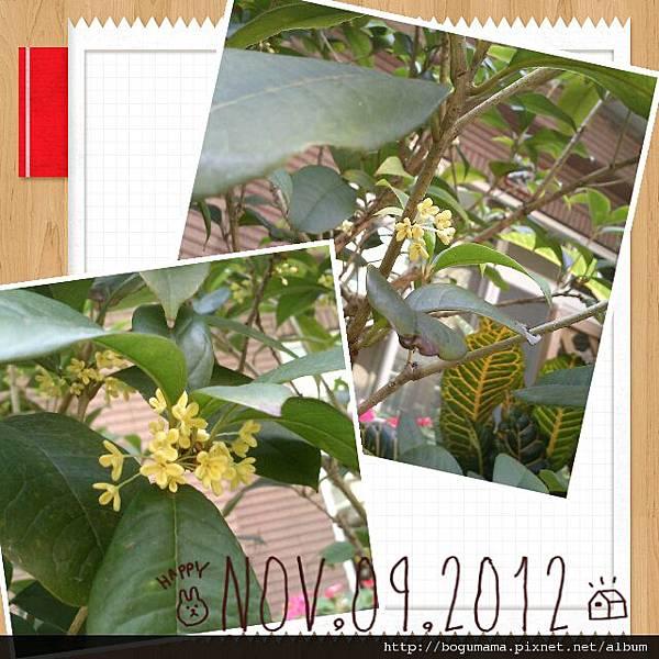 2012-11-10-11-06-21_deco