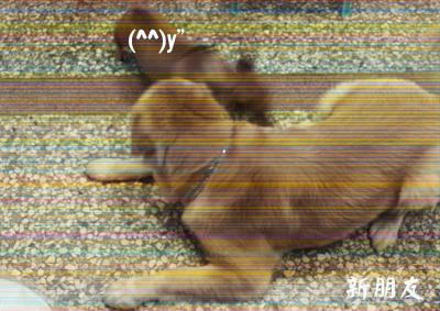 20088月社區多了一隻狗 (噗).jpg