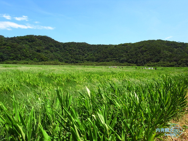 東源水上草原