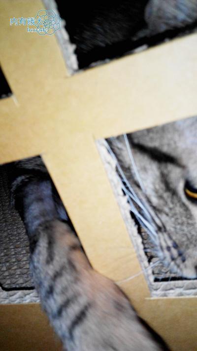 瓦軒紙品.3層貓城堡