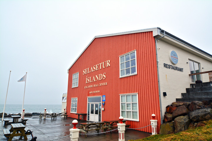 Selasetur Íslands.Icelandic Seal Center(冰島海豹中心)
