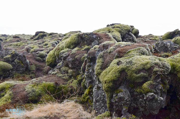 Icelandic Moss.苔原