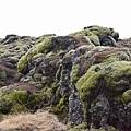 Skaftáreldahraun.Icelandic Moss.苔原