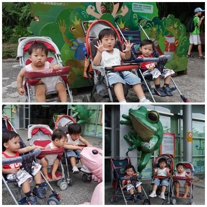 坐推車逛動物園.jpg